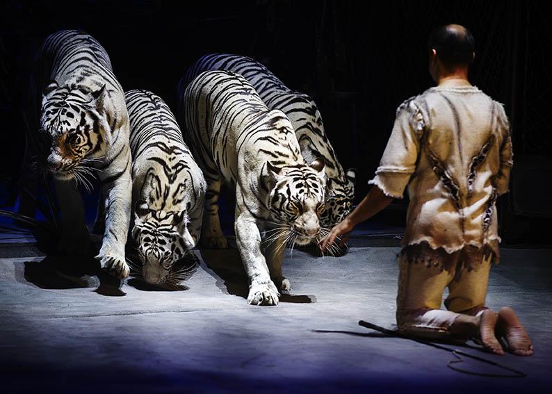 Взгляд фотографа на цирковое искусство